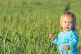 Child in a wheat field — Stock Photo