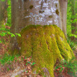 Tree with moss — Stock Photo