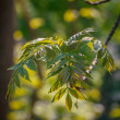 Background with branches and leaves, bokeh — Stock Photo