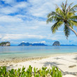 Stock Photo: Coconut tree and beach at Ngai Island, island in Andaman