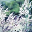 Vintage tone flower of grass in evening time — Stock Photo #32721957