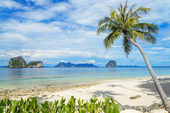 Coconut tree and beach at Ngai Island, an island in the Andaman — Stock Photo