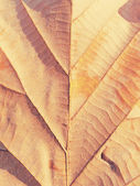 Dry leaf on textured paper — Stock Photo