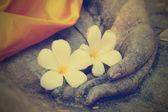 Plumeria flower on hand of buddha statue — Stock Photo