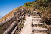 Walkway in Alpine savanna — Stock Photo