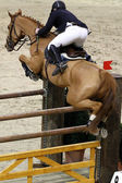 Horse jumping — Stock Photo