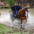 Driving horses tournament — Foto de Stock