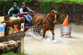 Torneo di cavalli di guida — Foto Stock