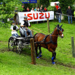 Driving horses tournament — Stock fotografie