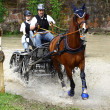 Driving horses tournament — Stock Photo