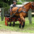 Driving horses tournament — Photo