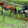 Driving horses tournament — Stockfoto