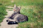 Kat rust in de tuin — Stockfoto