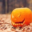 Jack-o-lantern in autumnal forest — Foto Stock