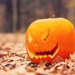 Jack-o-lantern in autumnal forest — Stock Photo