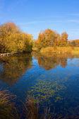 Beautiful Sas lake in Hungary in autumn dress — Foto Stock