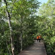 Stock Photo: Wood path way in Mangrove forest, Thailand