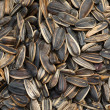 Sunflower seeds close up. — Stock Photo #20016851