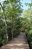 Wood path way in Mangrove forest, Thailand — Stock Photo