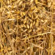 Close-up of freshly cut oat. — Stock Photo #12009592