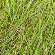 Lying grass. - Stock Photo