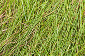Lying grass. — Stock Photo