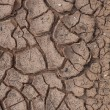 Cracks in dry soil. — Stock Photo #12013448