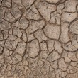 Cracks in dry soil. — Stock Photo #12013915