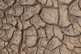 Cracks in dry soil. — Stockfoto