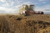 Harvest — Foto Stock