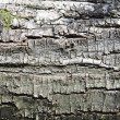 Birch bark — Stock Photo #14053271