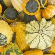 Collection of ornamental pumpkins — Stock Photo #14053387