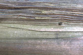 Wooden bark texture — Stockfoto