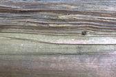 Wooden bark texture — Stock Photo