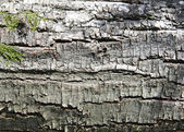 Birch bark — Fotografia Stock