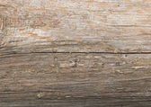 Wooden bark texture — Stock Photo