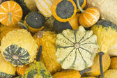 Collectie van decoratieve pumpkins — Stockfoto