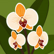 Vector Flower. Orchid in orange color. - Stock Vector