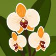 Vector Flower. Orchid in orange color. — Stock Vector