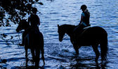 Horses Silhouette — Stock Photo