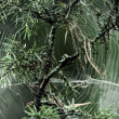 Spiderweb — Stock Photo #12560539