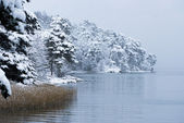 Swedish Winter Landscape — Stock Photo