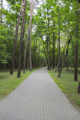 Foot way among the trees — Stockfoto