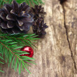 Spruce branches with cones — Stock Photo #36776879