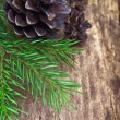 Fir branches and cones — Stock Photo