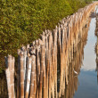Mangrove forests — Stock Photo