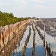 Stock Photo: Mangrove forests