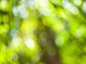 Zielony bokeh streszczenie — Zdjęcie stockowe