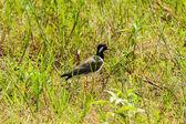 鳥 — ストック写真