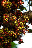 Fruits and fruit on the tree — Stockfoto